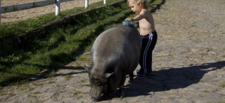 Altai-Adventure Falkenhain Kind mit Riesenschwein